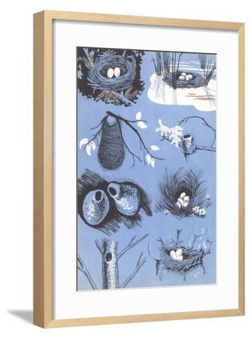 Birds' Nests--Framed Art Print