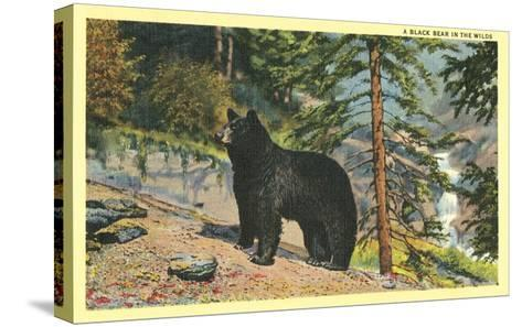Black Bear in the Wild--Stretched Canvas Print