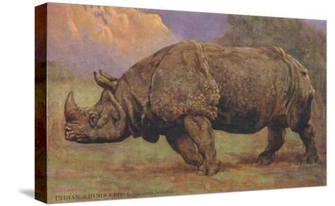 Charging Indian Rhinoceros--Stretched Canvas Print