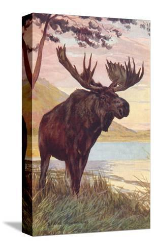 Moose by Lake--Stretched Canvas Print