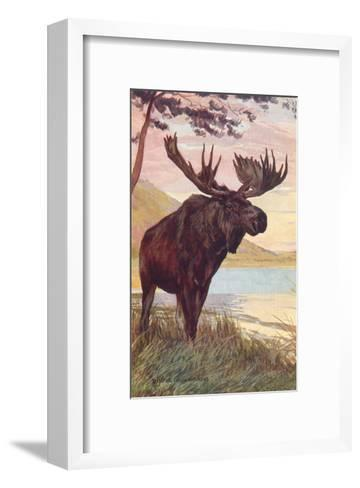 Moose by Lake--Framed Art Print