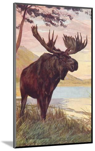 Moose by Lake--Mounted Art Print