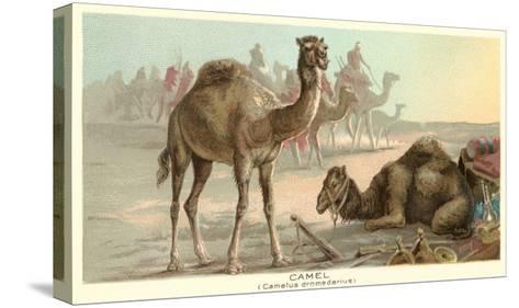 Caravan of Camels--Stretched Canvas Print