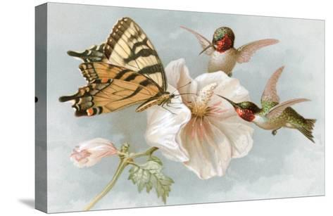 Hummingbirds, Hibiscus and Yellow Swallowtail--Stretched Canvas Print
