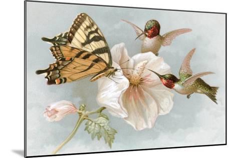 Hummingbirds, Hibiscus and Yellow Swallowtail--Mounted Art Print