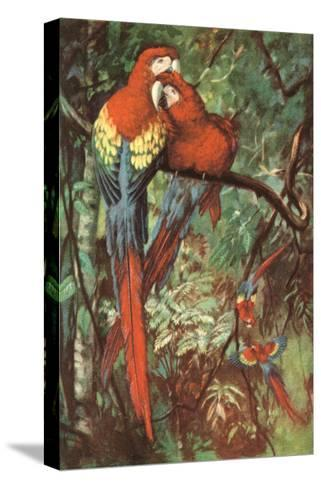 Macaws Nuzzling in Jungle--Stretched Canvas Print