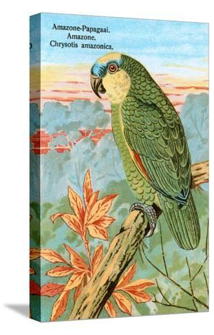Amazon Parrot--Stretched Canvas Print
