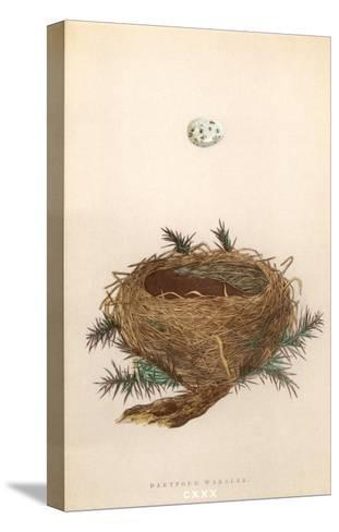 Dartford Warbler Egg and Nest--Stretched Canvas Print