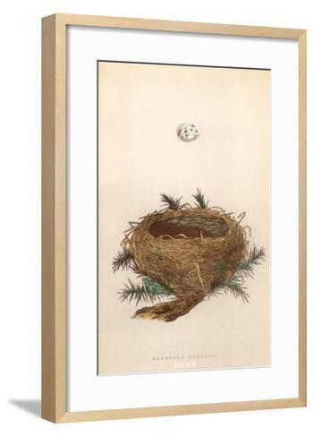 Dartford Warbler Egg and Nest--Framed Art Print