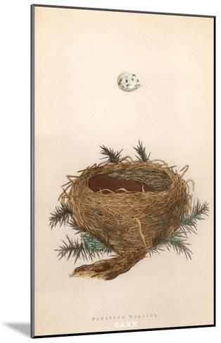 Dartford Warbler Egg and Nest--Mounted Art Print