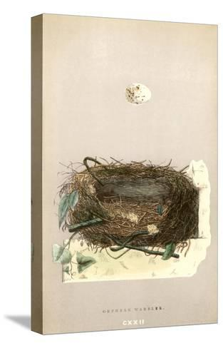 Orphean Warbler Egg and Nest--Stretched Canvas Print