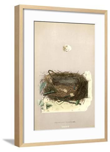Orphean Warbler Egg and Nest--Framed Art Print