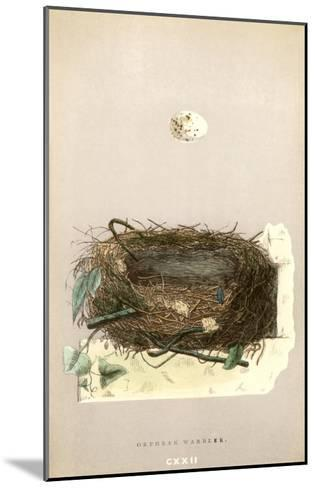 Orphean Warbler Egg and Nest--Mounted Art Print