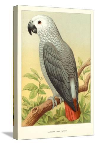 African Grey Parrot--Stretched Canvas Print