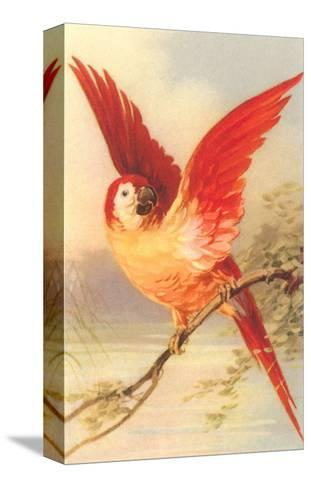 Mexican Double Yellow-Headed Parrot--Stretched Canvas Print