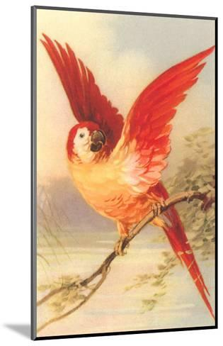 Mexican Double Yellow-Headed Parrot--Mounted Art Print