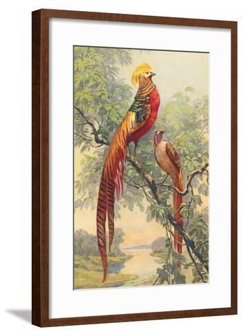 Chinese Golden Pheasant--Framed Art Print
