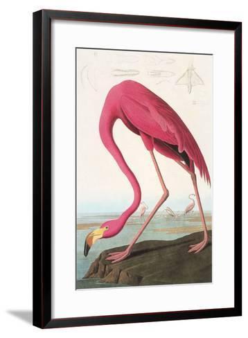 Flamingos--Framed Art Print