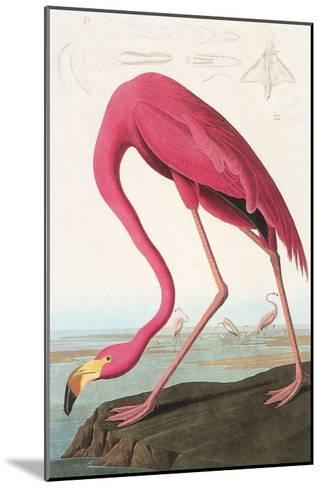 Flamingos--Mounted Art Print