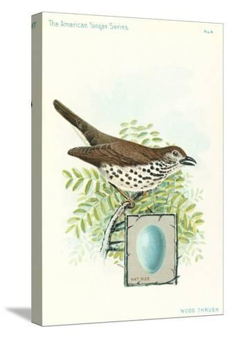 Wood Thrush and Egg--Stretched Canvas Print