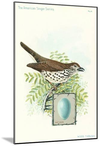 Wood Thrush and Egg--Mounted Art Print