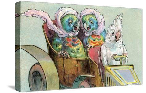 Cockatoo Driving Parrots--Stretched Canvas Print