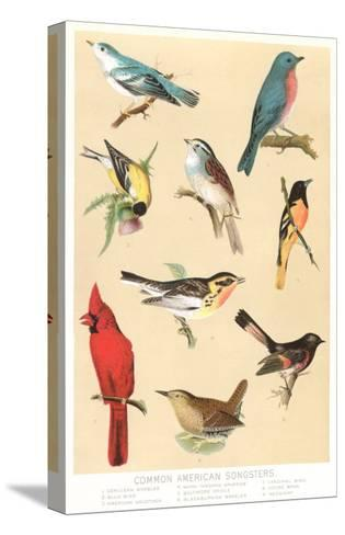 Common American Songbirds--Stretched Canvas Print