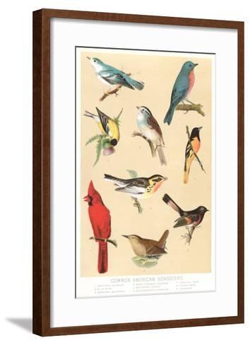 Common American Songbirds--Framed Art Print
