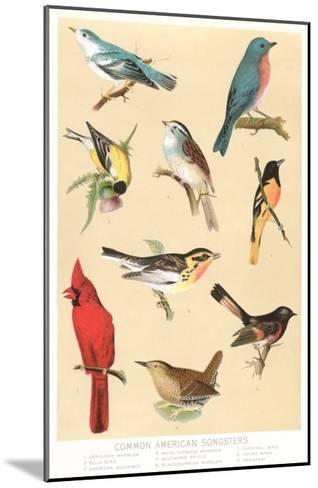 Common American Songbirds--Mounted Art Print