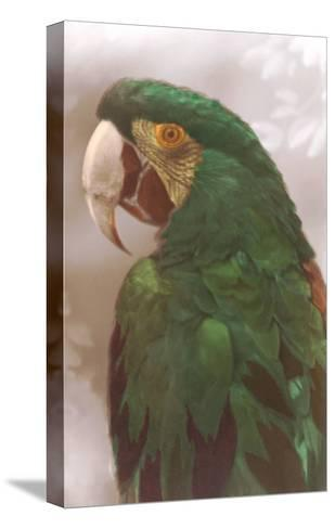 Green Macaw--Stretched Canvas Print