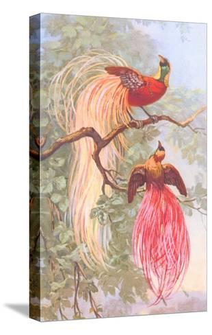 Chinese Golden Pheasants--Stretched Canvas Print