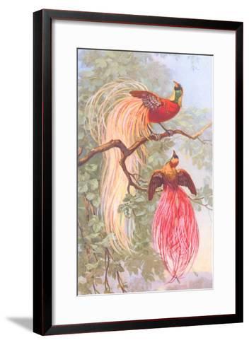 Chinese Golden Pheasants--Framed Art Print