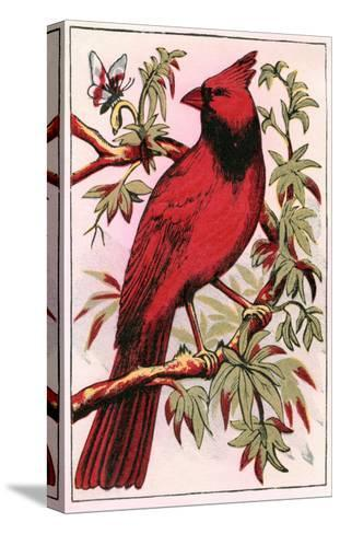 Cardinal--Stretched Canvas Print