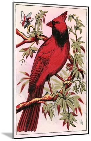 Cardinal--Mounted Art Print
