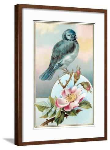 Bluebird on Rose Bush--Framed Art Print