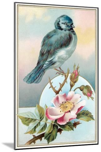 Bluebird on Rose Bush--Mounted Art Print