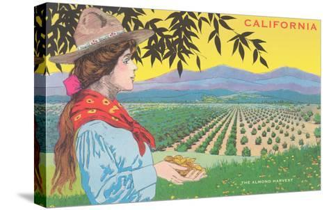 Woman Holding Almonds, California--Stretched Canvas Print