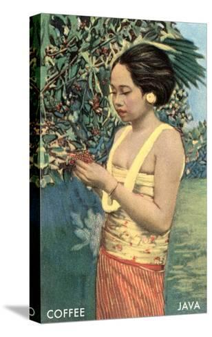 Javanese Girl Picking Coffee--Stretched Canvas Print