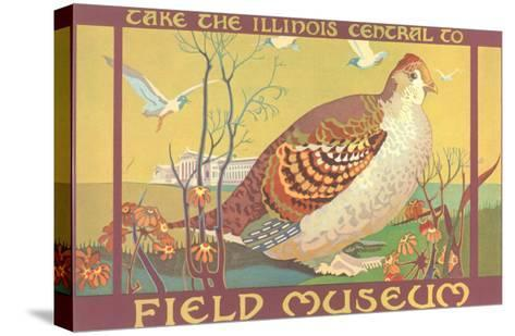 Poster for Field Museum with Quail--Stretched Canvas Print