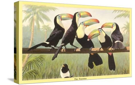 Toucans--Stretched Canvas Print