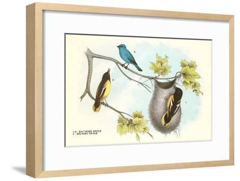 Baltimore Oriole, Orchard Oriole--Framed Art Print