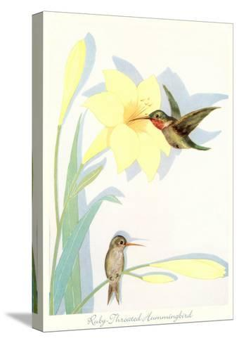 Ruby-Throated Hummingbirds, Illustration--Stretched Canvas Print