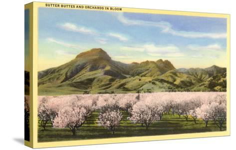 Sutter Buttes and Orchards in Bloom--Stretched Canvas Print