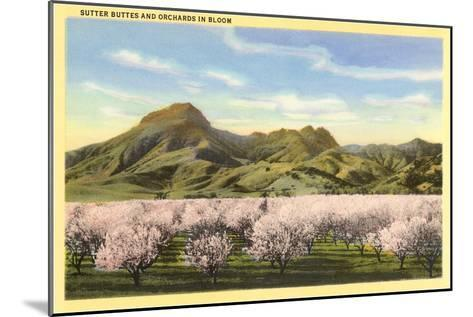 Sutter Buttes and Orchards in Bloom--Mounted Art Print