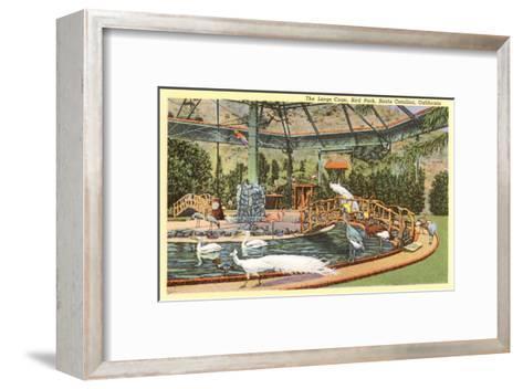 Bird Park with White Peacocks, Catalina--Framed Art Print