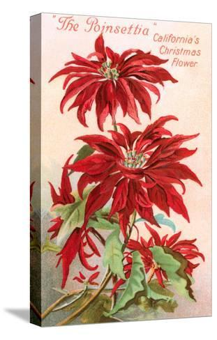 Poinsettias, California Christmas Flower--Stretched Canvas Print