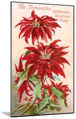 Poinsettias, California Christmas Flower--Mounted Art Print