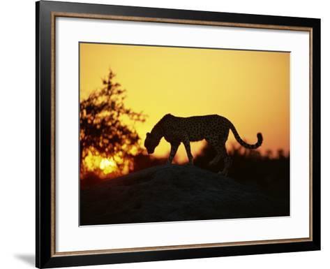 Cheetah, Okavango Delta, Botswana, Africa-Paul Allen-Framed Art Print