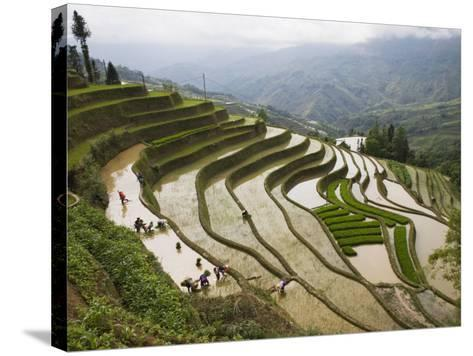 Terraced Rice Fields, Yuanyang, Yunnan Province, China-Angelo Cavalli-Stretched Canvas Print