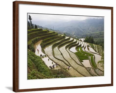 Terraced Rice Fields, Yuanyang, Yunnan Province, China-Angelo Cavalli-Framed Art Print